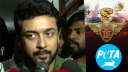 Actor Suriya using Jallikattu issue for movie publicity : PETA