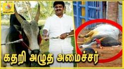 கதறி அழுத அமைச்சர்   Tamilnadu Minister Vijaya Baskar's Bull Dies during Jallikattu