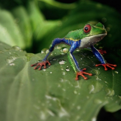 How The Frog Became The King of The Marshes- Tale from Africa