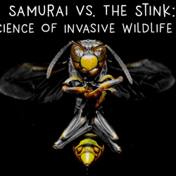 Samurai Vs. The Stink: The Science of Invasive Wildlife Species